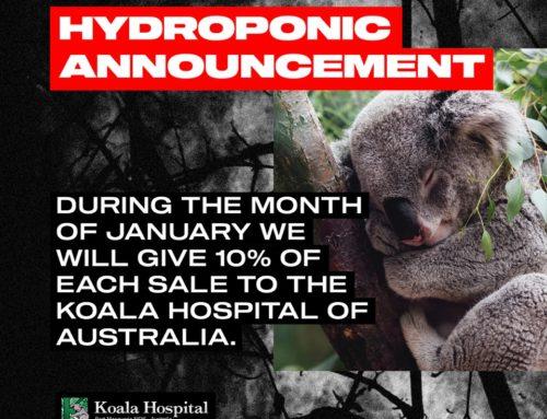 KOALA HOSPITAL – AUSTRALIA
